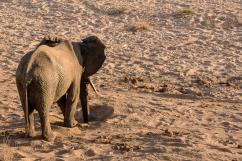 06 Elefanti011