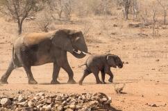 06 Elefanti065