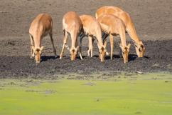 07 Antilopi, Zebre, Giraffe040