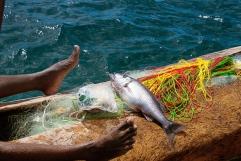 Una grosso pesce appena pescato, destinato ai piccoli ristoranti delle poche strutture turistiche della zona.